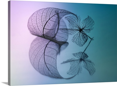 Story Of Leaf And Flower