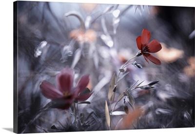 Une Fleur, une Histoire
