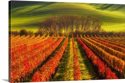 Vine-Growing