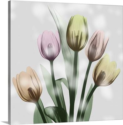 Awakening Tulips