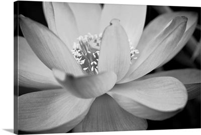 Black And White Flower II