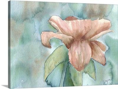 Blush Rose II