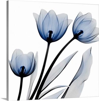 Brilliant Night Tulips_C68