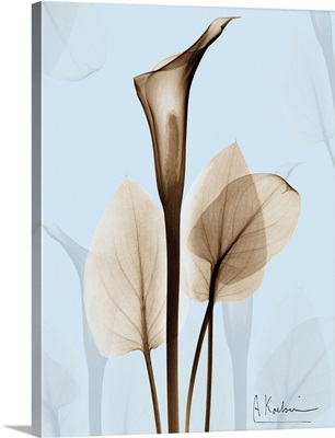 Calla Lily x-ray floral photograph