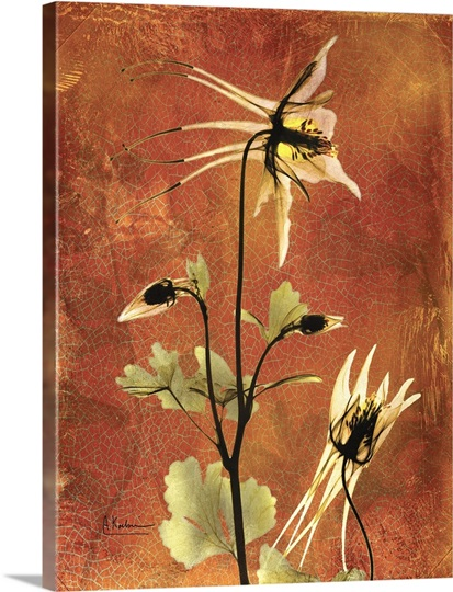 Columbine X Ray Photography Wall Art Canvas Prints