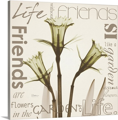 Daffodil Life II x-ray photography
