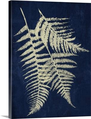 Dark Ferns II