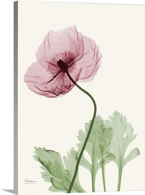 Dazzling Poppy 2