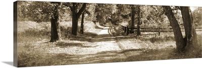 Dirt Sepia Road