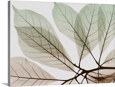 Earthy Magnolia