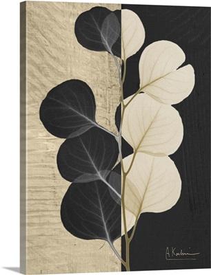 Eucalyptus Leaf X-Ray Photograph