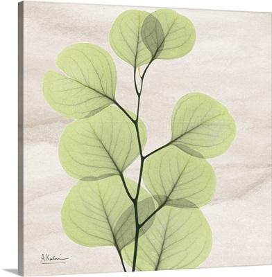 Eucalyptus Leaf X-Ray Photography - color