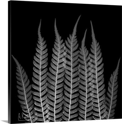 Fern Leaf X-Ray Photograph