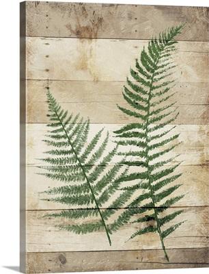 Ferns On Wood I