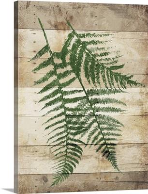 Ferns On Wood II