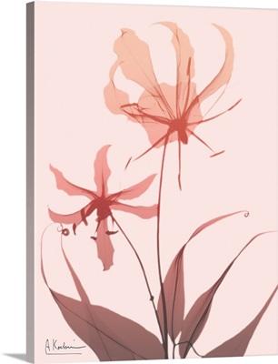 Furiosa Lily