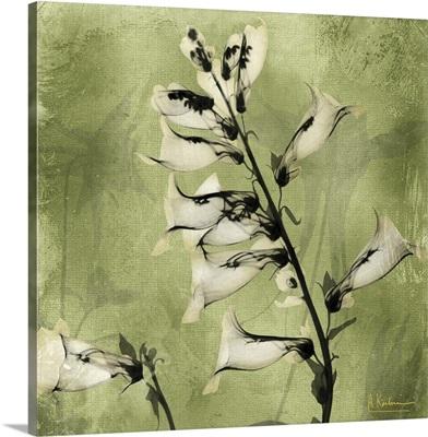 Golden Foxglove III x-ray photography