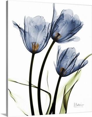 Indigo Infused Tulips