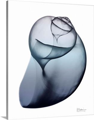 Lavender Snail 3