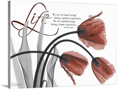Life Tulips x-ray photography