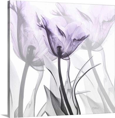 Lilac Luster Tulip 2