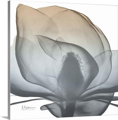 Magnolia Earthy Beauty