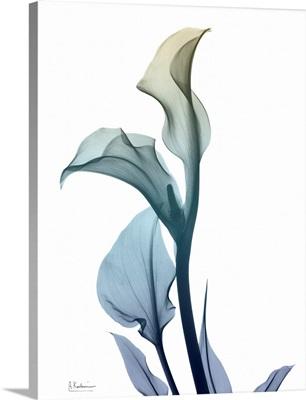 Ombre Expression 1_Calla Lily