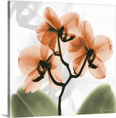Orange Orchid x-ray photography