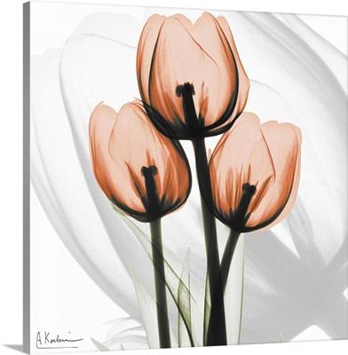 Orange Tulips x-ray photography
