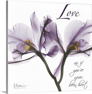 Orchid Love x-ray photography