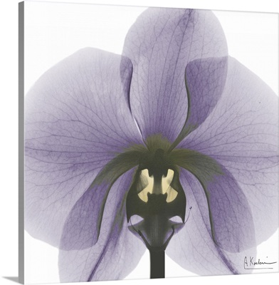 Orchid x-ray photography