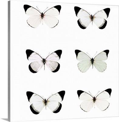 Pale Butterflies Six