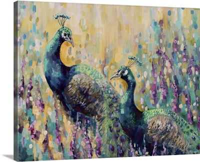 Peacocks In The Field