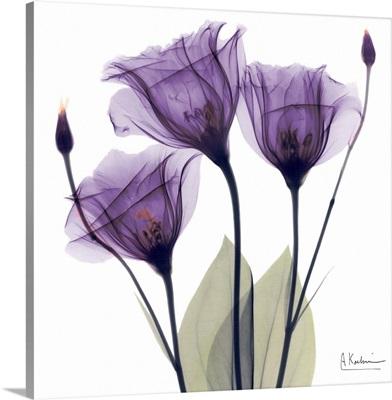 Purple Flower Trio