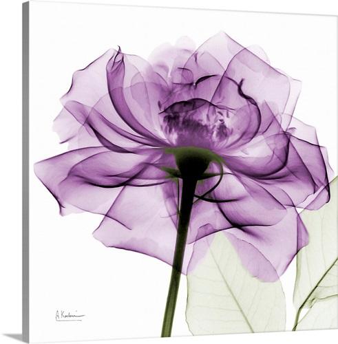 Purple Rose X-Ray Photograph Wall Art, Canvas Prints, Framed Prints ...