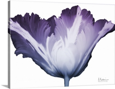 Radiant Blossom 1
