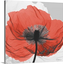 Red Poppy X-Ray Photograph