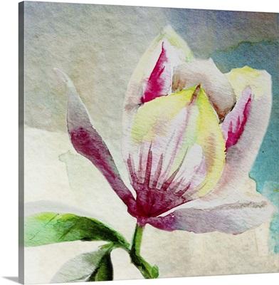 Rising Magnolia