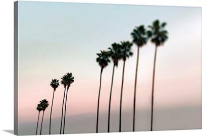 Rosy Palms