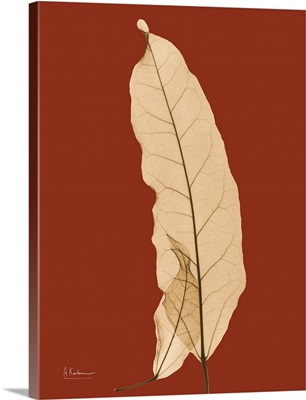 Sepia Leaf X-Ray Photograph
