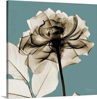 Sepia Rose X-Ray Photograph