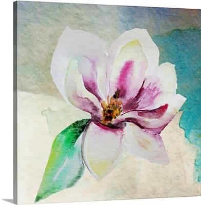 Solitary Magnolia II