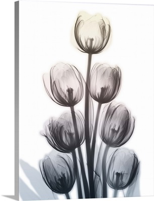 Springing Tulips