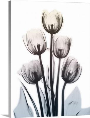 Springing Tulips II