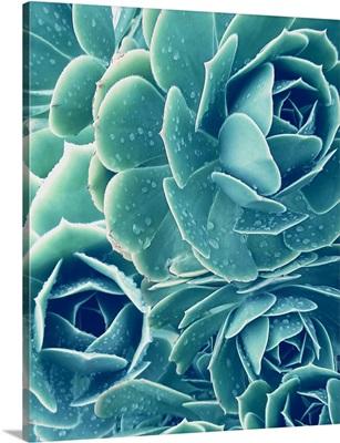 SucculentsWith Dew 2