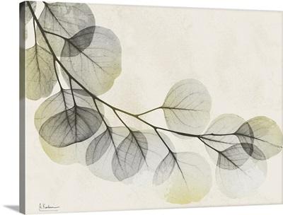 Sunkissed Eucalyptus
