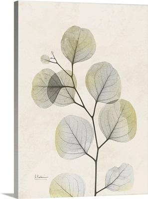 Sunkissed Eucalyptus 3