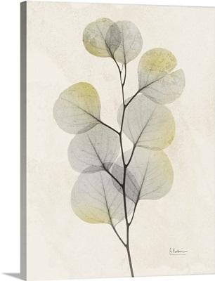 Sunkissed Eucalyptus 4