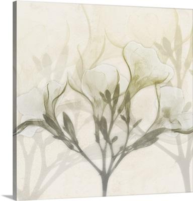Sunkissed Oleander