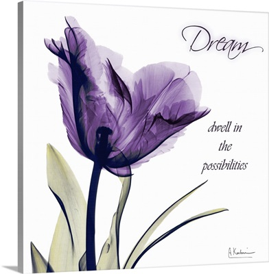 Tulip Dream x-ray photography